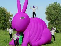Nella pancia del coniglio
