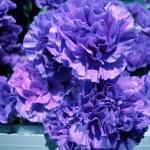 Common Flowers