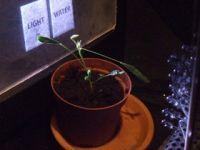 DIY, plant!